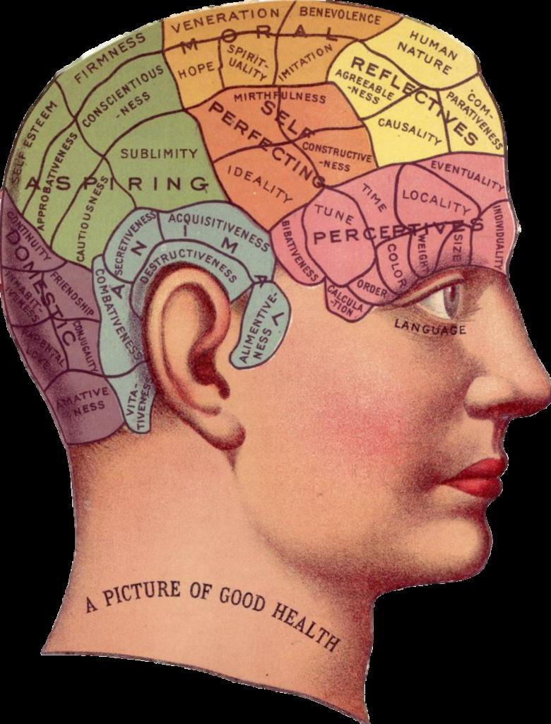 aree del cervello, mappa